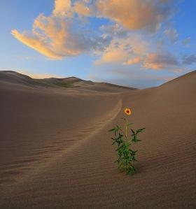 flower_in_desert